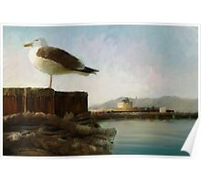San Francisco Seagulls from peir. Poster
