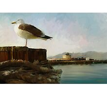 San Francisco Seagulls from peir. Photographic Print