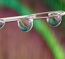 Water Drops by Debbie Cato