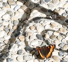 Butterfly 2 by FontaineN