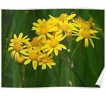 Yellow Posies For You Poster