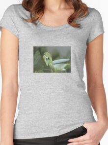 Green Mantis With Garden Background Vector Women's Fitted Scoop T-Shirt