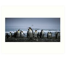 King Penguins Art Print