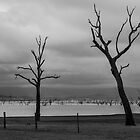 Trees at Lake Hume by Pauline Tims