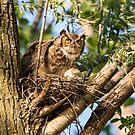 Nesting instinct by jamesmcdonald