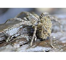 Spider Mom and Babies Photographic Print