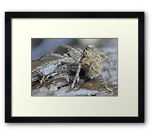 Wolf Spider and babies Framed Print