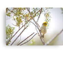 """"""" Nest Building"""" Canvas Print"""
