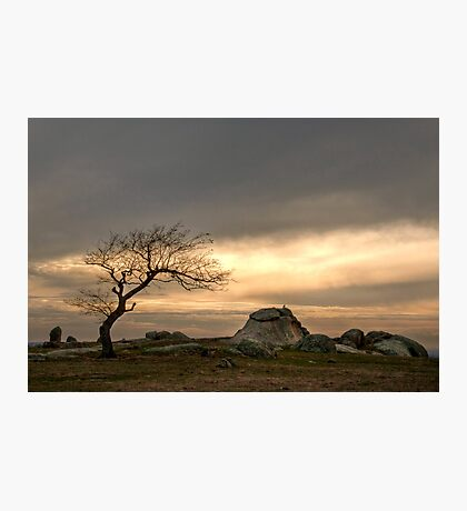 One Lonely Tree Photographic Print