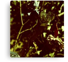 withered Canvas Print