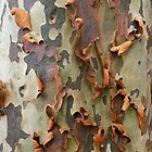 Peeling Bark Spotted Gum by Brett Thompson