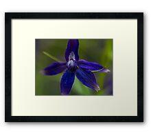 Macro Blue Flower Close Up Framed Print