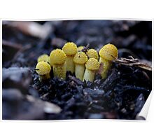 warty babies Poster