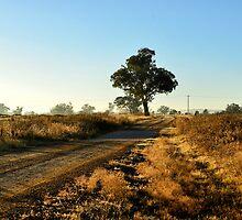Country Road - Dunedoo NSW Australia by Bev Woodman