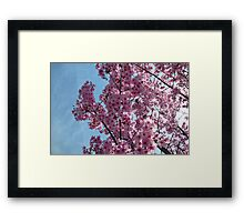 Blossoms up Close 3 Framed Print
