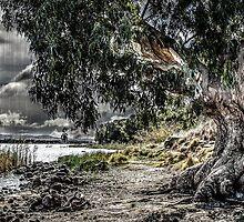 Natures Grip by Adis Zornic