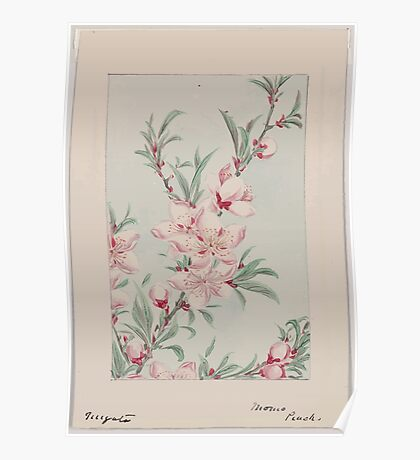 Peach tree branches with leaves and blossoms 001 Poster
