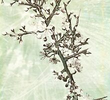 Blackthorn Blossom by viennablue