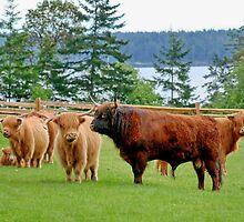 Highland Family by AnnDixon