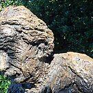 Profile Of Albert Einstein by Cora Wandel