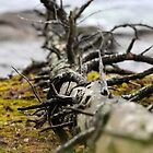Dead Wood by TerrillWelch