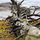 Dead Wood by TerrillWelch