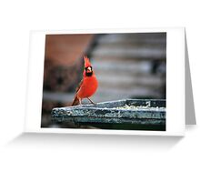 Here's looking at you! Greeting Card