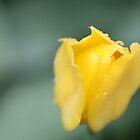 Flower in rain by UpNorthPhoto