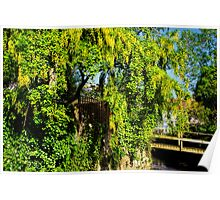 Laburnum By The River Poster