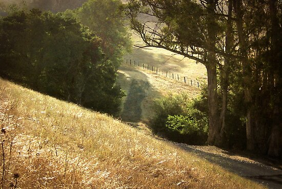 Along the Path by Ellen Cotton