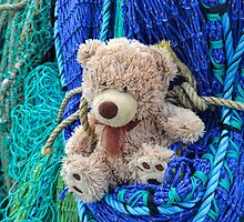 It's Harbour Life For Ted by lynn carter
