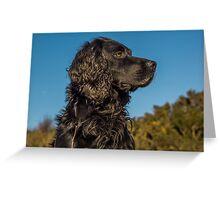 Animal, Dog, Cocker Spaniel, Black Greeting Card