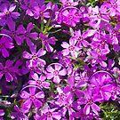 1509-pink flowers by elvira1