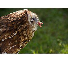 Tawny Owl.. Photographic Print