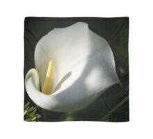 White Calla Lilies Over Black Background In Soft Focus Scarf