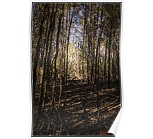 Woodstock Nature Reserve Poster