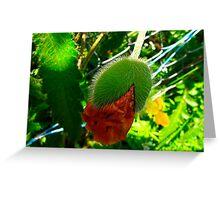 Prickly Poppy Greeting Card