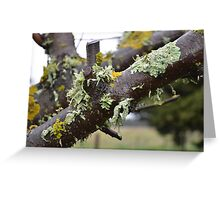 Lichen this one! Greeting Card