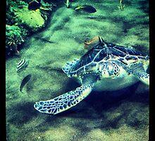 San Diego Zoo by photosbyamy