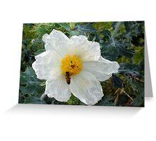 Honey Bee on Prickly Poppy Greeting Card