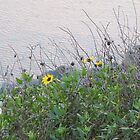 Flowers on the Lagoon by photosbyamy