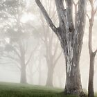 Trees In Mist by Brett Thompson