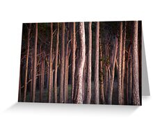 Morning Glow Spotted Gums Greeting Card