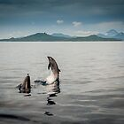 Dances with Dolphins by Karen Willshaw