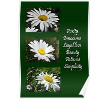 Common Daisy Collage Purity, Innocence and Love Greeting Poster