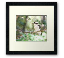 Kookaburra sits in the ole gum tree...   Framed Print