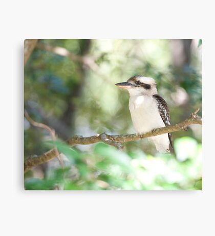 Kookaburra sits in the ole gum tree...   Canvas Print