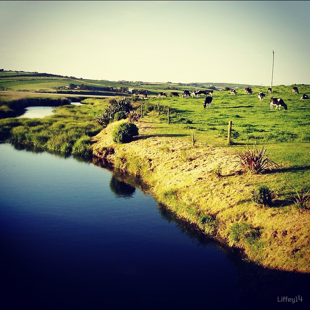 Meadow, Cows and water by Liffey14