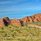 Bungles by Liz Percival