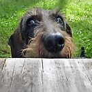 Can I come up to fetch a treat ? .............Maybe........... by Bine